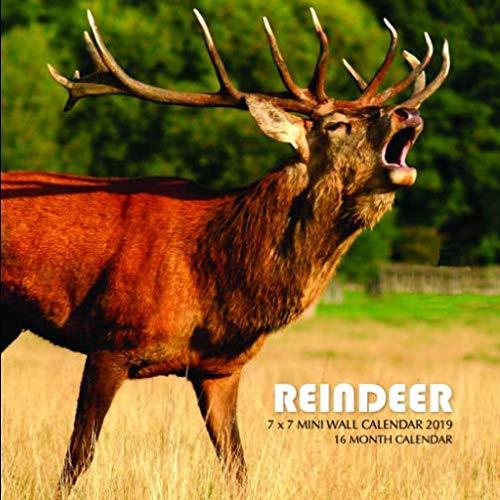 Reindeer 7 x 7 Mini Wall Calendar 2019: 16 Month Calendar ()
