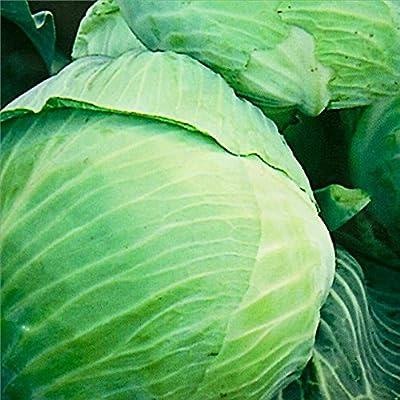 Cabbage seeds Stone Head Heirloom Vegetable Seeds from Ukraine