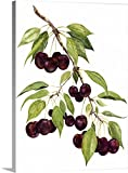 Michael Willett Gallery-Wrapped Canvas entitled Watercolor Cherries