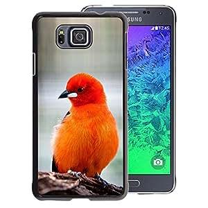 A-type Arte & diseño plástico duro Fundas Cover Cubre Hard Case Cover para Samsung ALPHA G850 (Bird Feathers Orange Red Furry Beak)