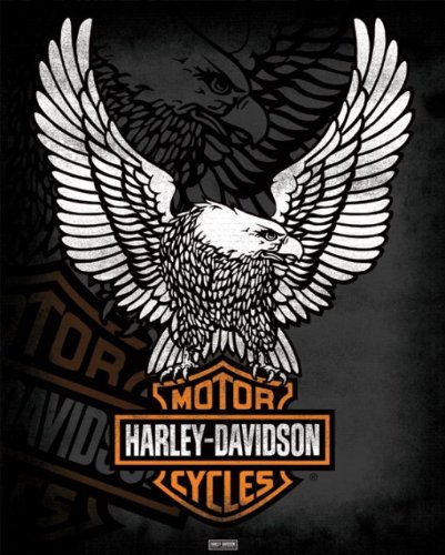 Harley Davidson - Eagle - 40 x 50 cm Cartel / Póster: Amazon ...