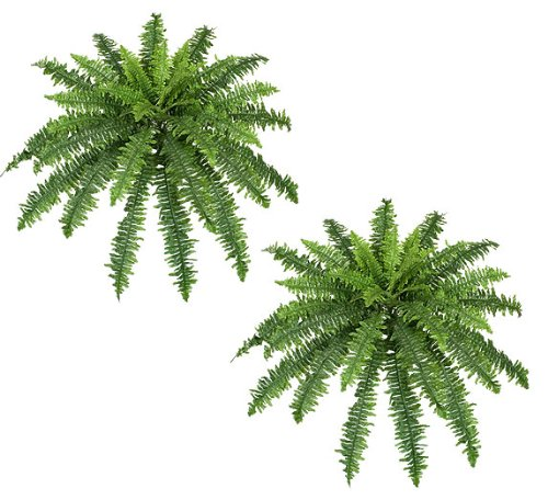TWO 40'' Spread Artificial Boston Fern 48 Leaves Silk Hanging Bush Tree Plant by Arcadia Silk Plantation