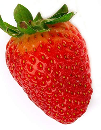 Seed Red Strawberry Winner Rare Toscana HQ + Basquet or Not Delicious Sweet Juicy Great Delicious Tasty Canada Bestdealhere Seed (30)