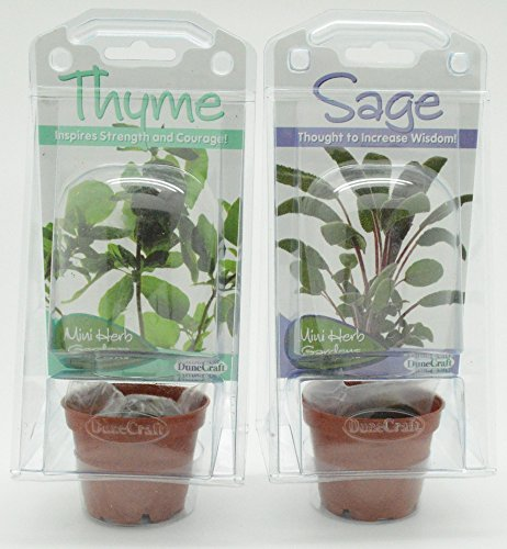 DuneCraft Fresh Sage-Thyme Mini Herb Garden Science Terrarium Bundle