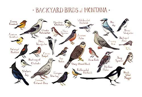 Amazon.com: Backyard Birds of Montana Field Guide Art ...