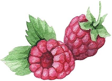 Amazon com: Beautiful Artistic Watercolor Natural Plant