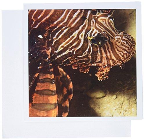 3dRose Lionfish, Scuba diving, Tukang Besi, Indonesia Greeting Cards, 6