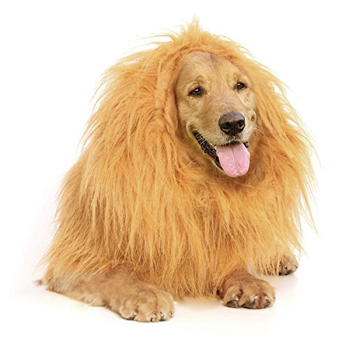 Furryfido Lion Mane -Lion Wig for Medium to Large Sized Dogs with Ears plus Gift [Lion Tail] Lion Wig for Dog— Halloween party fancy costume - Complementary Lion Mane for (Lion Mane Dog Halloween Costume)