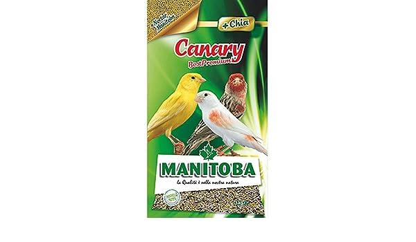 MANITOBA la alimentación de aves canary- kg 1 - Comida de pájaros: Amazon.es: Jardín