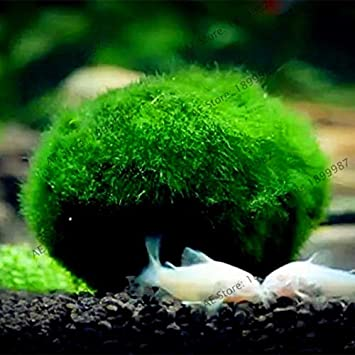 Casavidas 100pcs / g SES Acuario de Agua Bonsai aleatoria acuáticas s Flores embellecer Gard pecera Cubierta: 15: Amazon.es: Productos para mascotas
