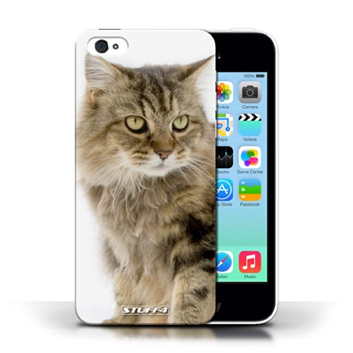 Etui / Coque pour Apple iPhone 5C / Gueux conception / Collection de Espèces de chats