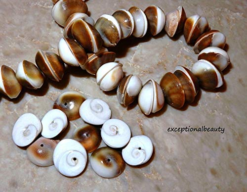 - 75 Shiva Operculum Swirl Eye Shell Medium 14mm Seashell Domed Round Beads