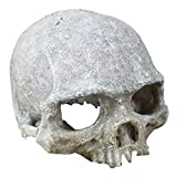 Aquarium Decorative Skeleton Hole Resin Artificial Head Skeleton Decoration - Aquarium Otaru Aquarium Decorative Cave Landscape Pet Reptile House