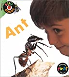Ant, Karen Hartley, 1575724561