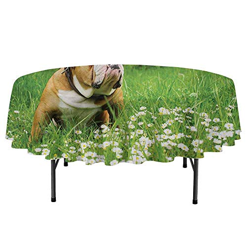 Bulldogs Desktop - Douglas Hill English Bulldog Printed Round Tablecloth Park in Spring with Blooming Daisies and Trees and Bulldog Desktop Protection pad D47 Inch Fern Green Brown White