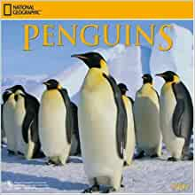 Penguin Calendar Numbers 0 to 31