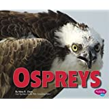 Ospreys (Birds of Prey)