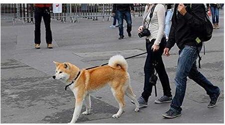 ericotry 1 correa ajustable de nailon para perro de 1,2 m color rojo correa de entrenamiento y collar