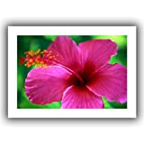 ArtWall ''Maui Pink Hibiscus'' Unwrapped Canvas Art by Kathy Yates, 16 by 22-Inch