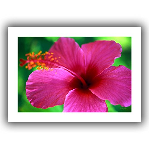ArtWall ''Maui Pink Hibiscus'' Unwrapped Canvas Art by Kathy Yates, 16 by 22-Inch by ArtWall