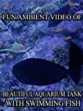 Fun Ambient Video of Beautiful Aquarium Tank With Swimming Fish