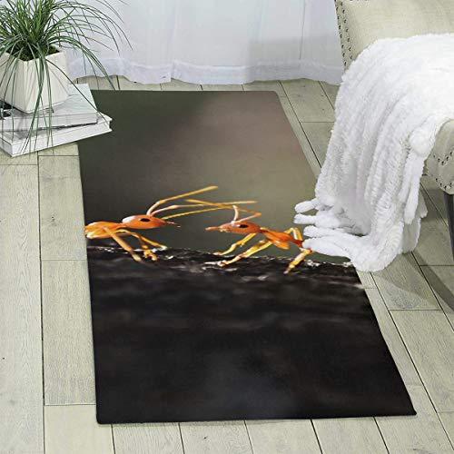 Kjaoi Carpet 70