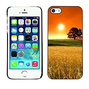 LASTONE PHONE CASE / Carcasa Funda Prima Delgada SLIM Casa Carcasa Funda Case Bandera Cover Armor Shell para Apple Iphone 5 / 5S / Cool Rye Field Oak Tree Orange Gold Nature