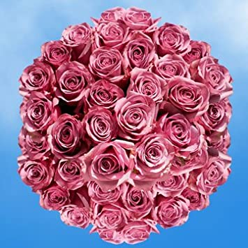 Amazon Globalrose 100 Fresh Cut Lavender Roses Cool Water