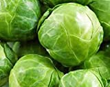 Brussel Sprouts, Long Island Improved Seeds, Organic, NON-GMO, 25+ seeds per package,Brussel Spouts are super healthy. They are also low calorie.