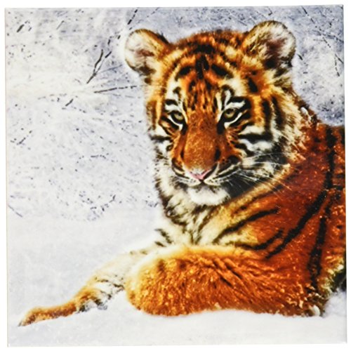 3dRose cst_173002_3 Baby Tiger Cub in The Snow Digital Composition of Four Photographs-Ceramic Tile Coasters, Set of (Baby Tile Coaster)
