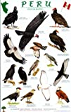 Peru Raptors Bird Guide