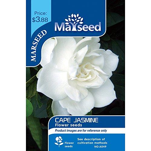 Marseed 10 Gardenia Cape Jasmine seeds large flower indoor balcony green planting potted flowers seeds and seeds (Jasmine Cape Gardenia)
