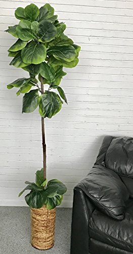 LCG Floral 17TFP37 Fig Tree in a Basket Silk Plant, - Trees Silk Fig
