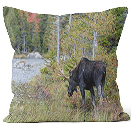 Nine City Bull Moose at Sandy Stream Pond Throw Pillow Cushion Cover,HD Printing Decorative Square Accent Pillow Case,20