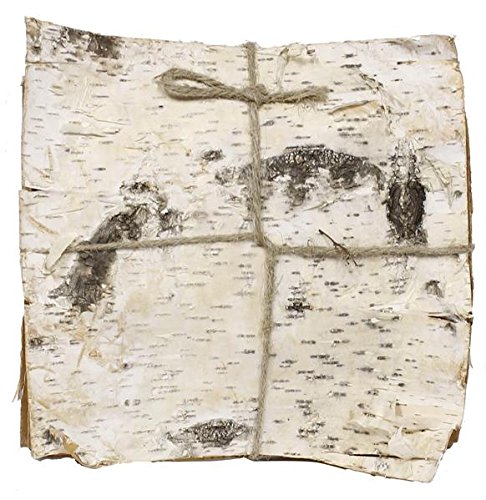 Natural White Birch Bark. Bundle of 6 (11.75'' square birch bark) by Import