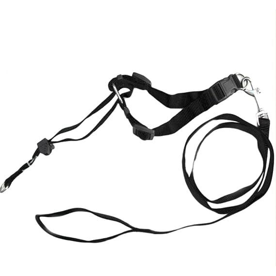 Amazon Com Potelin Adjustable Dog Muzzle Mouth Rope Nylon Pet