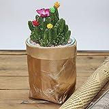 CapsA Multifunction Storage Bag Washable Kraft Paper Bag Tearless Leather Food Insulation Bag Plant Flowers Pots Home Storage Bag Reuse