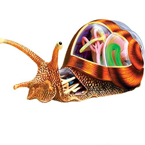 [해외]CRGP 4D 비전 달팽이 모델 DIY 장난감 해부학 32 개 분리 가능한 장기 조립 모델 / CRGP 4D Vision Snail Model DIY Toy Anatomy with 32 PCS Detachable Organs Assembled Model