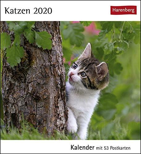 Postkartenkalender Katzen - Kalender 2020 - Harenberg-Verlag - mit 53 heraustrennbaren Postkarten - 16 cm x 17,5 cm