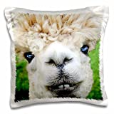 3D Rose Alpaca Lama South America White Pillow Case, 16'' x 16''