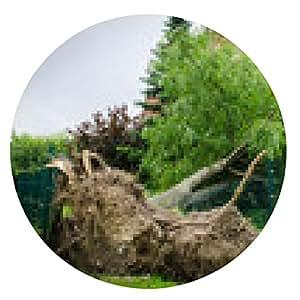 alfombrilla de ratón árbol arrancado en una cerca - ronda - 20cm