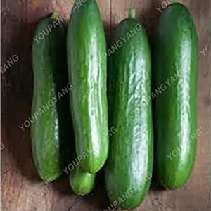50Pcs/pack Dutch Cucumber Cuke Seeds Mini Fruit Cucumber Tree Succulents Juicy Vegetable Seeds Potted Plants Bonsai For Garden Cucumber Seeds