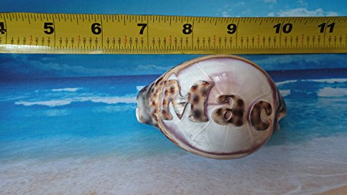 'Mac' Personalized Custom Engraved Shells. Names Engraved on a seashell - Hand Made - All Natural - Say It On A Shell