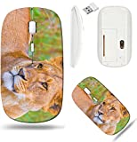 Liili Wireless Mouse White Base Travel 2.4G Wireless Mice with USB Receiver, Click with 1000 DPI for notebook, pc, laptop, computer, mac book IMAGE ID: 18845096 A young Lioness smiles for the camera