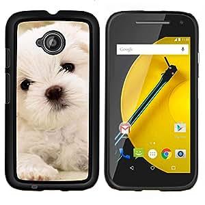 KLONGSHOP // Cubierta de piel con cierre a presión Shell trasero duro de goma Protección Caso - Maltés del perro de perrito blanco suave - Motorola Moto E2 E2nd Gen //