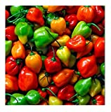 David's Garden Seeds Pepper Hot Habanero Rainbow Mix SL163 (Multi) 50 Open Pollinated Seeds