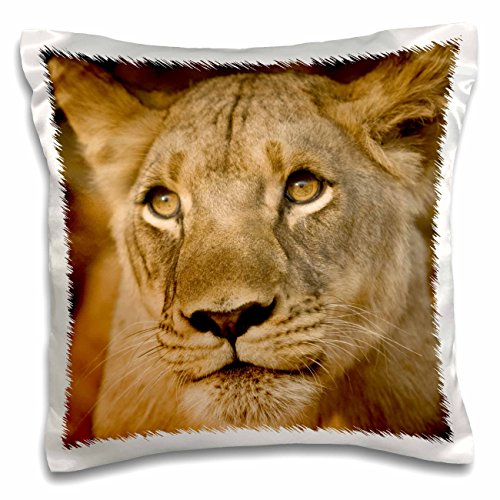 3D Rose Livingstone Zambia Africa Close up of a Lioness Pillow Case, 16