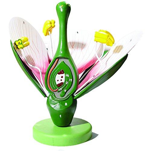 flower model - 3
