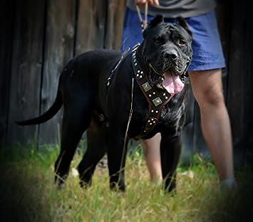 Bestia EROS Big Dog Chest Plate Leather Harness Handmade in Europe Padded