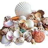 Ardisle Plage Coquilles De Mer Mixtes coquille Craft Décor de table Aquarium Petit moyen par Ardisle